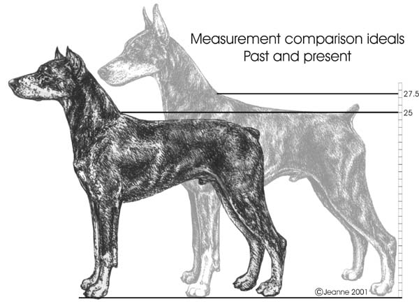 Standard Size: The Whys – DPCA Breeder Education