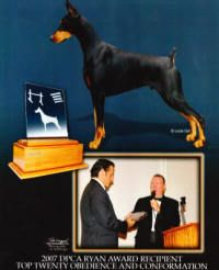 Champion Doberman